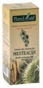 Extract Seminte de Mesteacan 50ml Plantextrakt