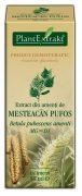 Extract Muguri de Mestecan Pufos 50ml Plantextrakt