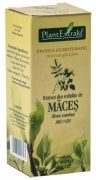 Extract Mladite de Maces 50ml Plantextrakt